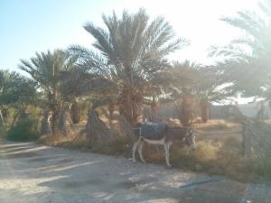 jericho-donkey1
