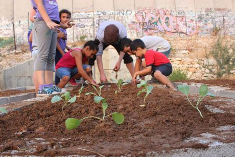 Community Gardens by Lucas, Palestine.